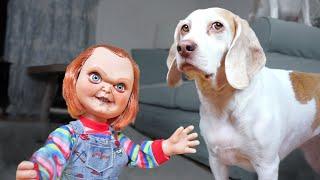 Dogs vs Lil
