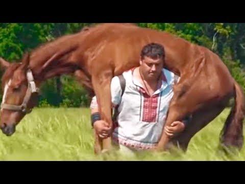 Xxx Mp4 MAN CARRIES HORSE 3gp Sex