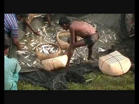 fishing in bangladesh nabigonj hobigonj bd 12