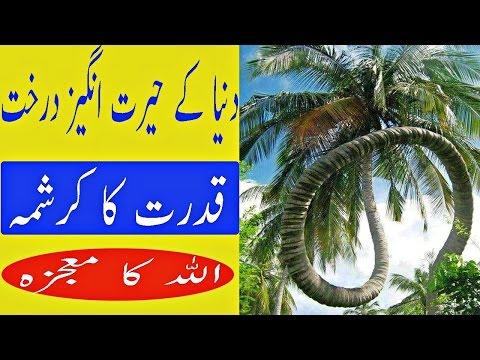 Xxx Mp4 Dunya K Ajeeb O Gareeb Darakht Miracle Of Allah 3gp Sex