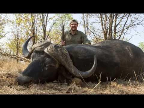 Hunting Cape Buffalo