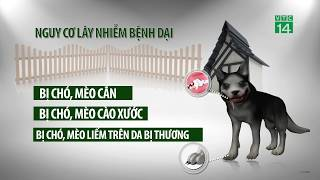 VTC14 | Xử trí sau khi bị chó cắn để không chết vì bệnh dại
