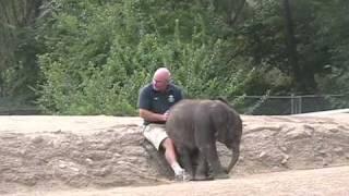 baby elephant sits on keeper