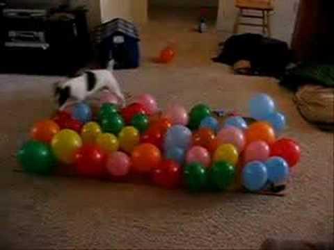Köpek Balonları Tek Tek Patlatıyor TrForumuz.Biz