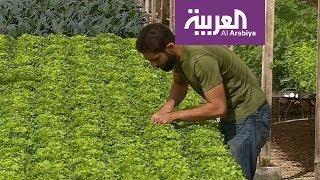 صباح العربية:  مصر تزرع بدون تربة