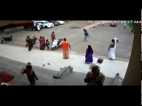 Stray Dogs Try to Attack Little Girl in Kerala Temple
