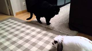 Nyasha kisses Tisha. Friendship attempt