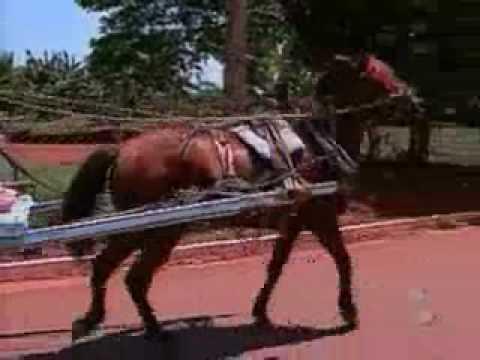Carroceiro abandona cavalo morto em Campo Grande