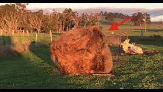 Giant 'Hay Monster' Turns Out To Be A Farm Animal Having The Time Of Her Life