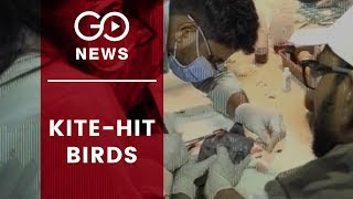 Kite-Hit Birds Being Treated