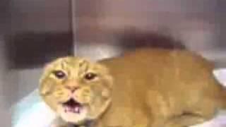 Le chat le plus méchant du monde