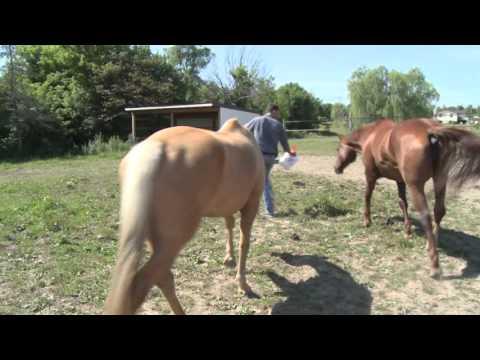 West Michigan's Horse Whisperer and Trainer Jordan Brasser