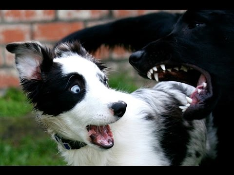 Perros Chistosos y Tiernos 10 minutos Videos perros Divertidos