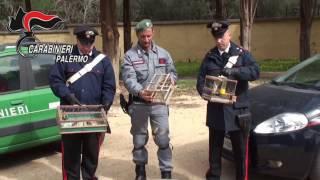Palermo: blitz carabinieri a Ballarò