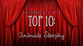 sleepy animals  modernmom top 10