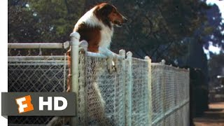 Lassie Come Home (3/10) Movie CLIP - Jumping the Fence (1943) HD
