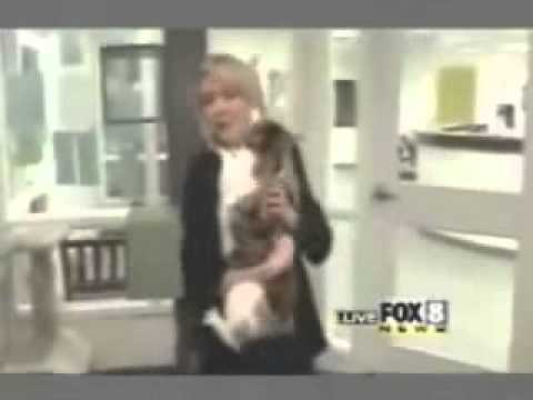 Cat Attacks Woman On Live Television