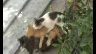 evsiz kediler sokağı