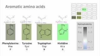 Biochemistry 4.0: Introduction to amino acids