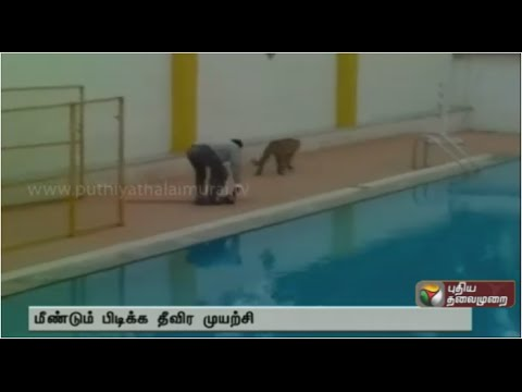 Leopard that injured students at Bangalore school escapes
