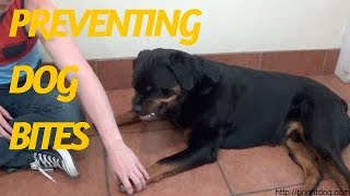 Dog Trainer Gets Bitten To Demonstrate Dog Warning Signs And Bite Inhibition