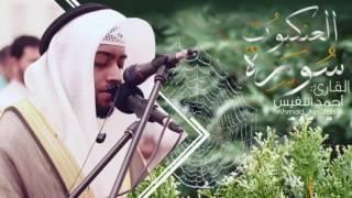 سورة العنكبوت القارئ أحمد النفيس | (most beautiful recitation)
