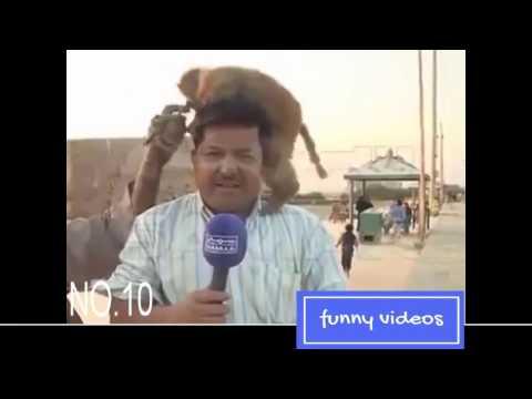 Top 10 funny videos in pakistani media