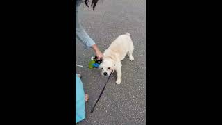 Crazy woman kicking dog in Vancouver