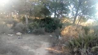 غابة كنستال وهران