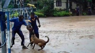 Awesome Sri Lankan police dog  clips