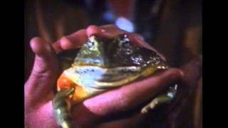 FROGS - 1991 - Paul Williams - Shelly Duvall - FROG sequel