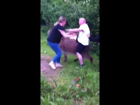 Funny irish man falls off donkey