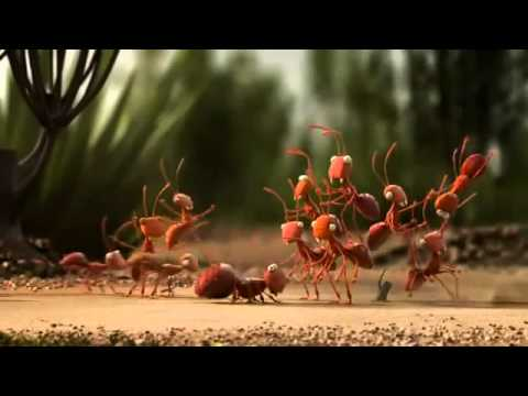 Xxx Mp4 Explanatory Videos Team Work Ants Vs Pholidota 3gp Sex
