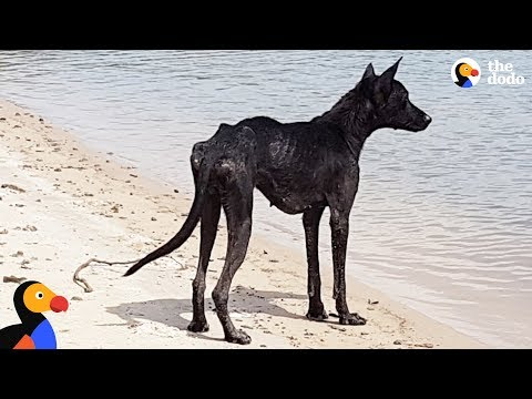 Xxx Mp4 Man On Cruise Finds Dog On Deserted Island And Rescues Her The Dodo 3gp Sex