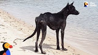 Man On Cruise Finds Dog On Deserted Island and Rescues Her | The Dodo