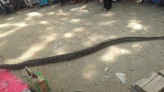 বাজারে ধরা পরলো ১০ হাত লম্বা অজগর  সাপ The market suddenly caught 10 feet long python না দেখলে মিস