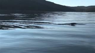 Le rorqual bleu Jaw Breaker dans l'estuaire 2013 © GREMM