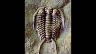 ৫০ কোটি বছরের পুরোনো ডুবোজাহাজে পাওয়া গেল এক রহস্যময় বস্তু !!! যা জানলে চমকে