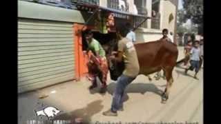 haat! haat! haat!!! ek birat goru chagoler haat (হাট! হাট!! হাট!!! এক বিরাট গরু ছাগলের হাট)