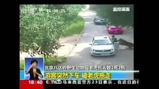 Tiger attacks, kills woman at drive-through animal park in China