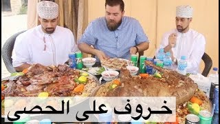 المظبي على الحصى في موطنه الأصلي - صلالة عمان 🇴🇲 موسم٤/ح٤