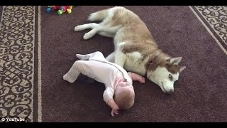 MOST FUNNY BABIES VIDEOS IN 2015 - 2016