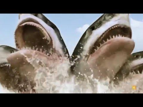 Xxx Mp4 All Creature Effects 8 5 Headed Shark Attack 3gp Sex