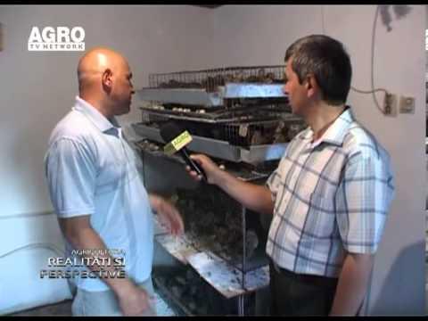 Infiintarea unei microferme de prepelite