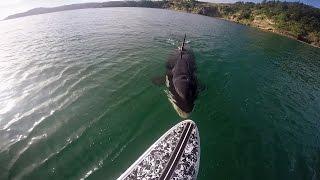 GoPro Awards: Orca vs. Paddle Board