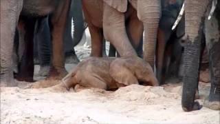 An elephant is born
