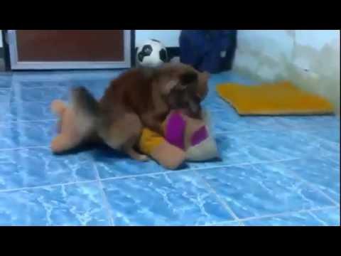Xxx Mp4 Dog Sex Show Chopper Funny Videos Best Funny 3gp Sex