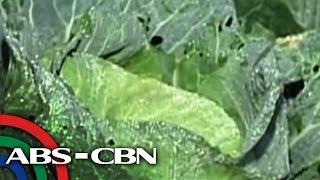 Bandila: Mga pananim sa Benguet, nabalot ng yelo