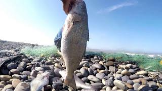 Pesquería de Orilla con Red 【TRASMALLO】