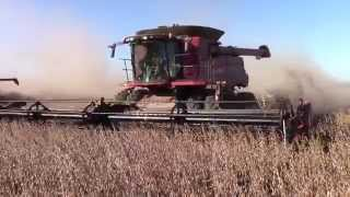 3 Case IH 8230 Axial-Flow Combines Harvesting Soybeans